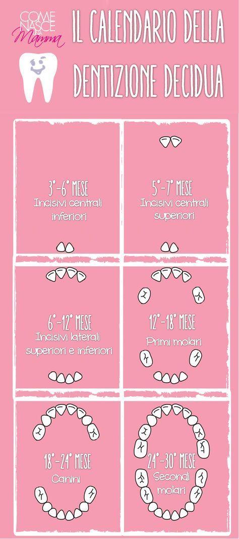 Il processo di formazione dei denti nel neonato può essere descritto in più passaggi. Abbiamo realizzato un'infografica della prima dentizione per avere una visione d'insieme. I dentini erompono gradualmente a partire dal terzo mese di vita ... ma ogni bebè ha i propri tempi, non abbiate fretta.