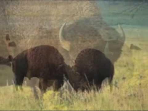 Tatanka Oyate, Honouring the buffalo nation (+playlist)