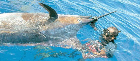 Gérard Grave flèche un marlin bleu de 259 kg