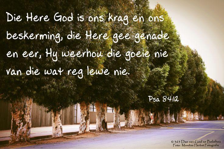 Dag 140 Bybelvers: Psalm 84:12 Die Here God is ons krag en ons beskerming, die Here gee genade en eer, Hy weerhou die goeie nie van dié wat reg lewe nie.