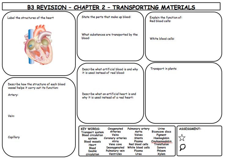 From the same series as the previous pin, these are excellent revision sheets for B3