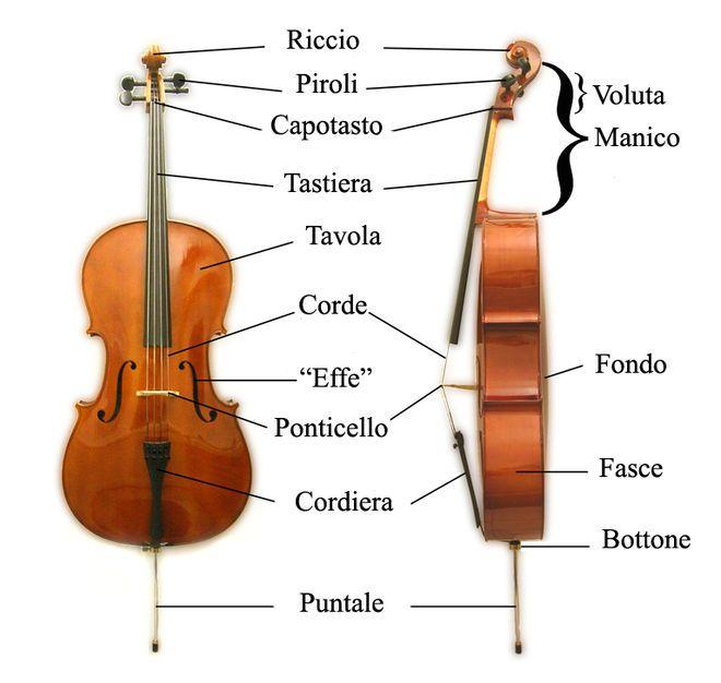 Violoncello - Wikipedia