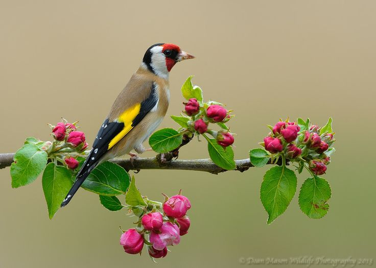 Bloomin Goldfinch!