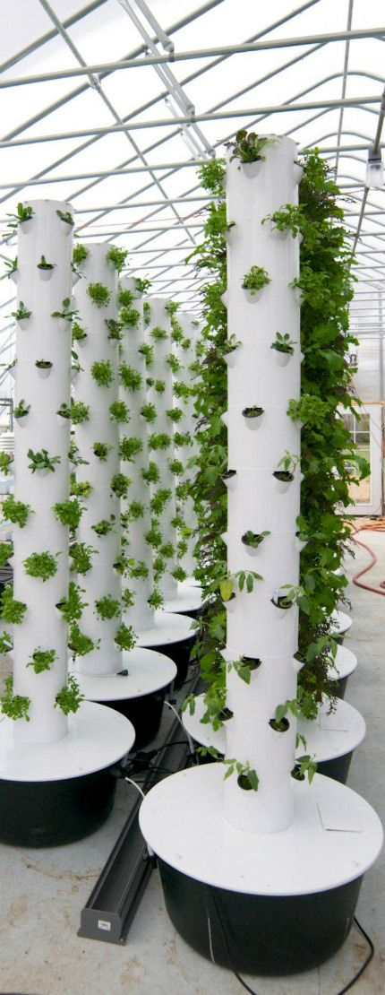 Vertical farm design                                                                                                                                                                                 More