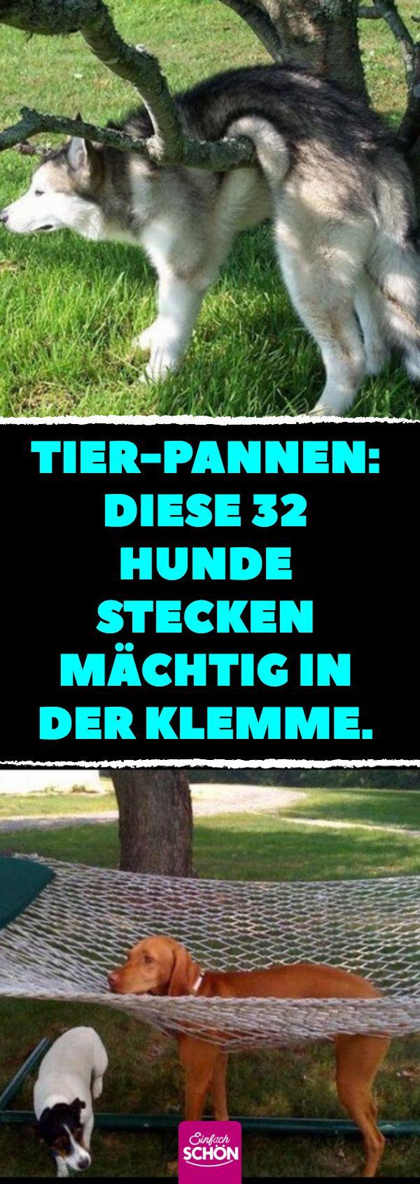 32 Hunde, die in der Klemme stecken. #hunde #problem #lustig – Sigried Kurschat