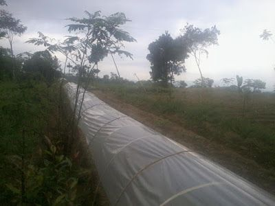SECELENG: Seedling Cultivation of Chili's farm