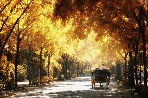 .Fall Beautiful, Except, Maria Luisa, Park, Autumn Leaves, I Love Fall, Fall Trees, Fall Weather, María Luisa