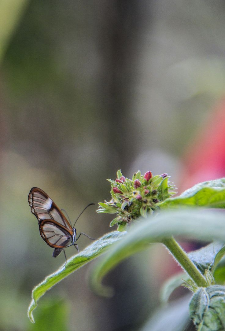 Mariposa, Fotografía natural.