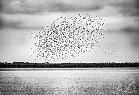 "Vogelschwarm - ""FAPA"" 1st FAPA competition"