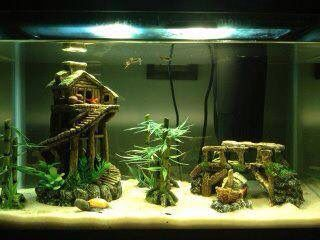 Asian jungle themed fish tank. I used standard store bought decor and supplies.