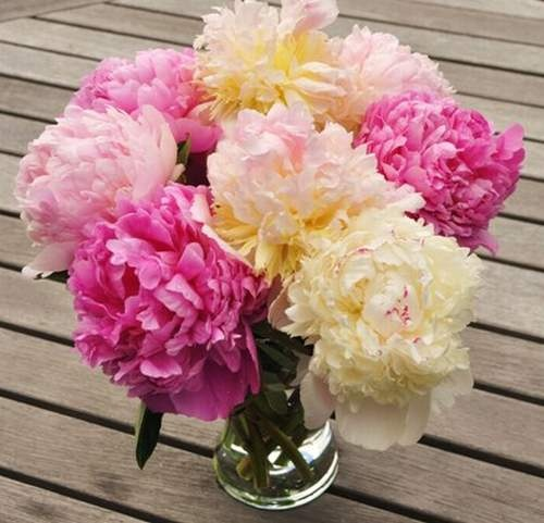 Peonies for Spring: Peoniesth Scream, Favorite Flowerpeoni, Favorite Things, Peonies Thes Scream, Favorite Flowers Peonies, Flowers Plants Trees Shrubs, The Farm, Peonies Bouquets, Seasons Flowers