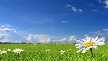 цветы, Фото, небо, обои на рабочий стол, лето, солнце, трава, природа, весна, поле