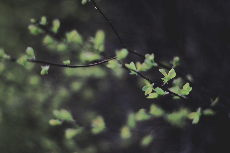 moja wiosna by collien.deviantart.com on @DeviantArt