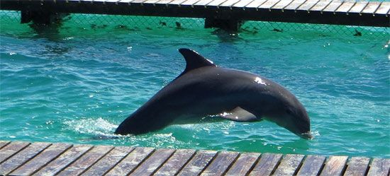 One of the members of the Dolphin Discovery Anguilla family    http://www.dolphindiscovery.com/anguilla/anguilla-location-overview.asp