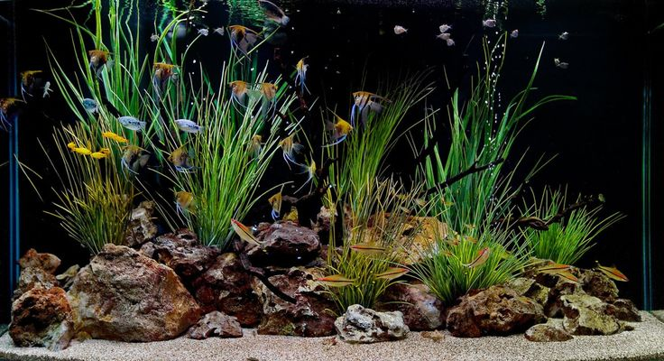 Designs Layout Amazing Simple Decorative Freshwater Fish Tank Fish