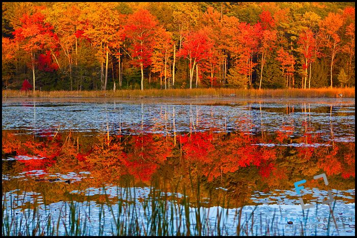 17 Best Images About Fall Foliage On Pinterest Wisdom
