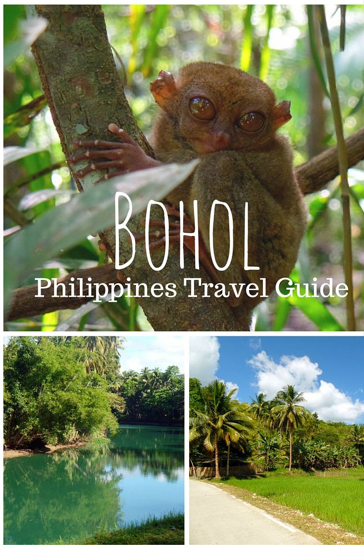 Bohol: The Filipino Jungle King