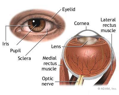 """A recent, annoying, and all-too-frequent symptom for me:  """"Nystagmus is a term to describe fast, uncontrollable movements of the eyes... Other causes [of acquired nystagmus] include: ...Inner ear disorders such as labyrinthitis or Meniere's disease.""""  Click through for an overview."""