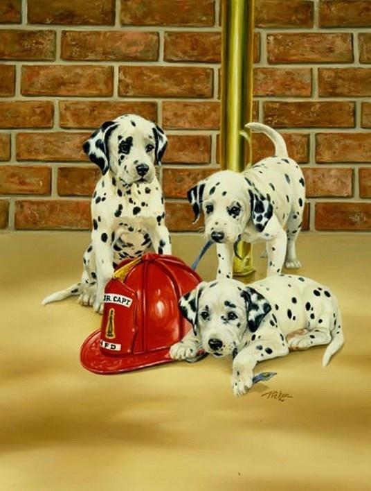 chien  pompier 3