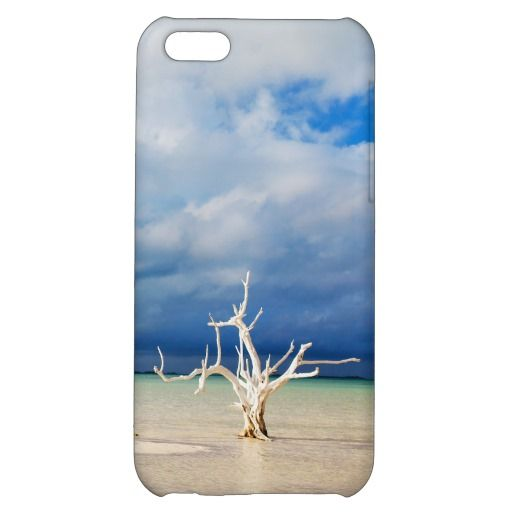Lone tree at beach cover for iPhone 5C