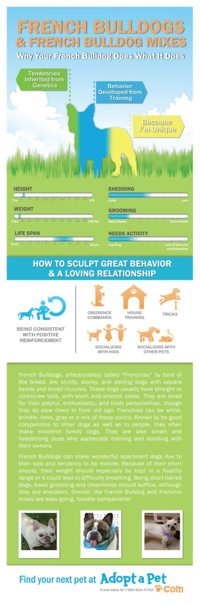 Everything you ever wanted to know about French Bulldog and French Bulldog mixes. www.adoptapet.com