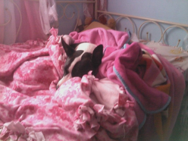My cutie Dulce snuggling in my daughter's bed after her bath!!! xoxoMy Daughters, Dulce Snuggles, Daughters Beds, Cutie Dulce