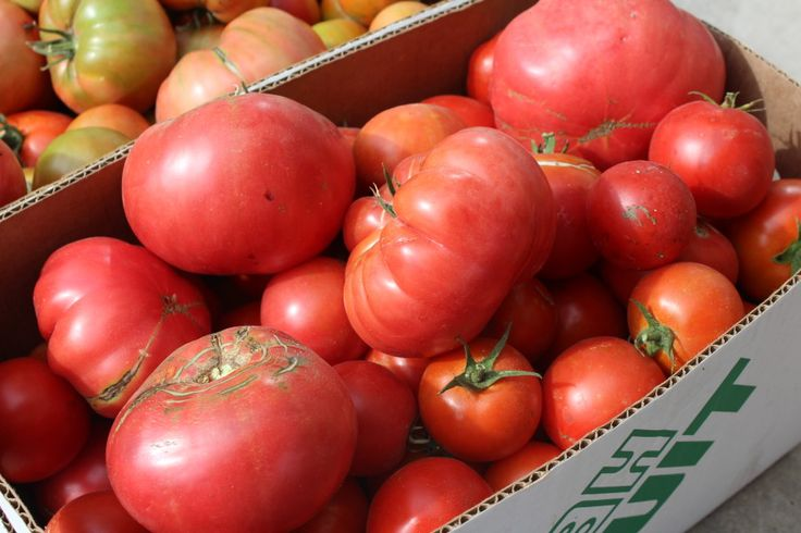 The 5 best crops for Self Sufficient Gardeners tomatoes