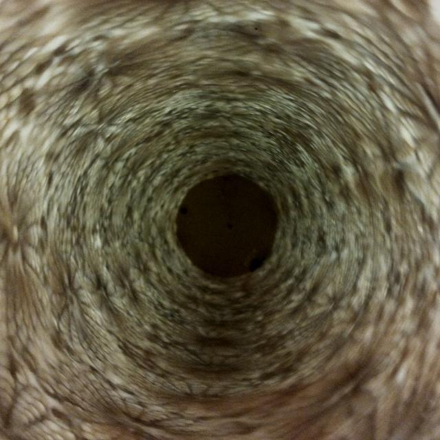 Inside a vase