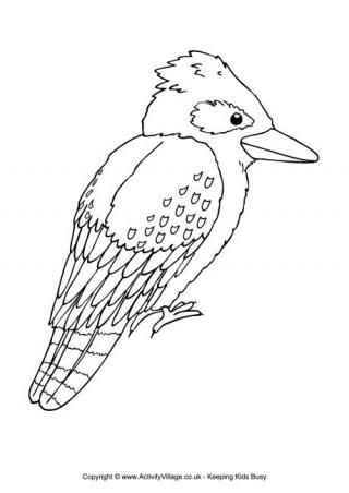 kookaburra colouring page aussie 12 days of xmas pinterest animals colouring pages and. Black Bedroom Furniture Sets. Home Design Ideas