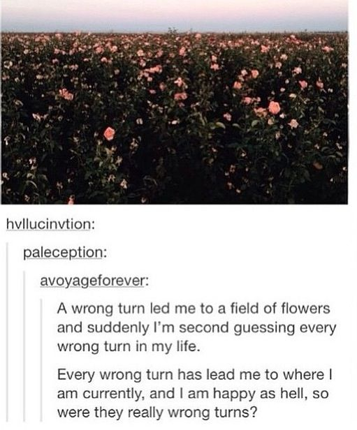 Plot twist it is the field of poppies from wizard of Oz