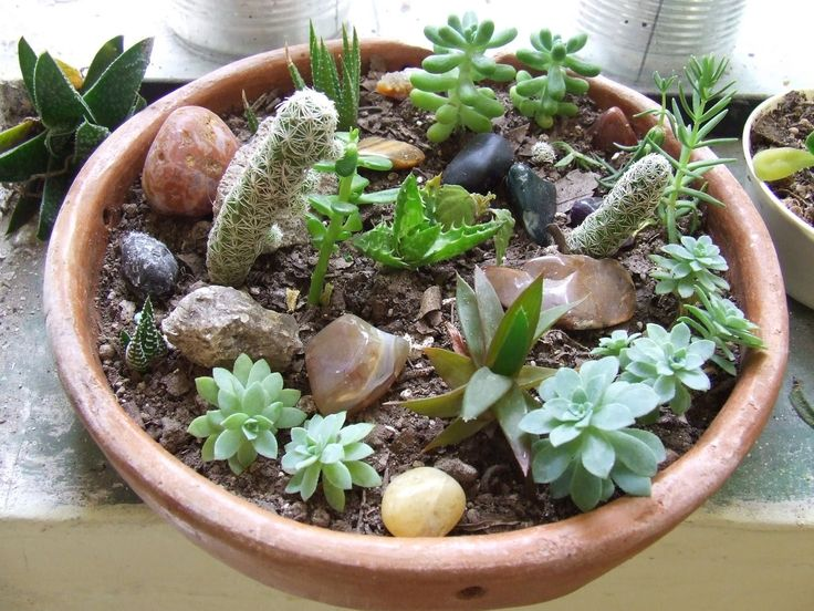 Time Is For The Birds: Mini Succulent Rock Garden