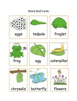 Butterfly and Frog Life Cycle Bundle Math and Literacy Packet