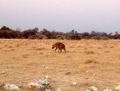 iena Safari at the Etosha National Park - Namibia, Africa