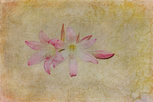 Peaceful Flower by Stewart Baird