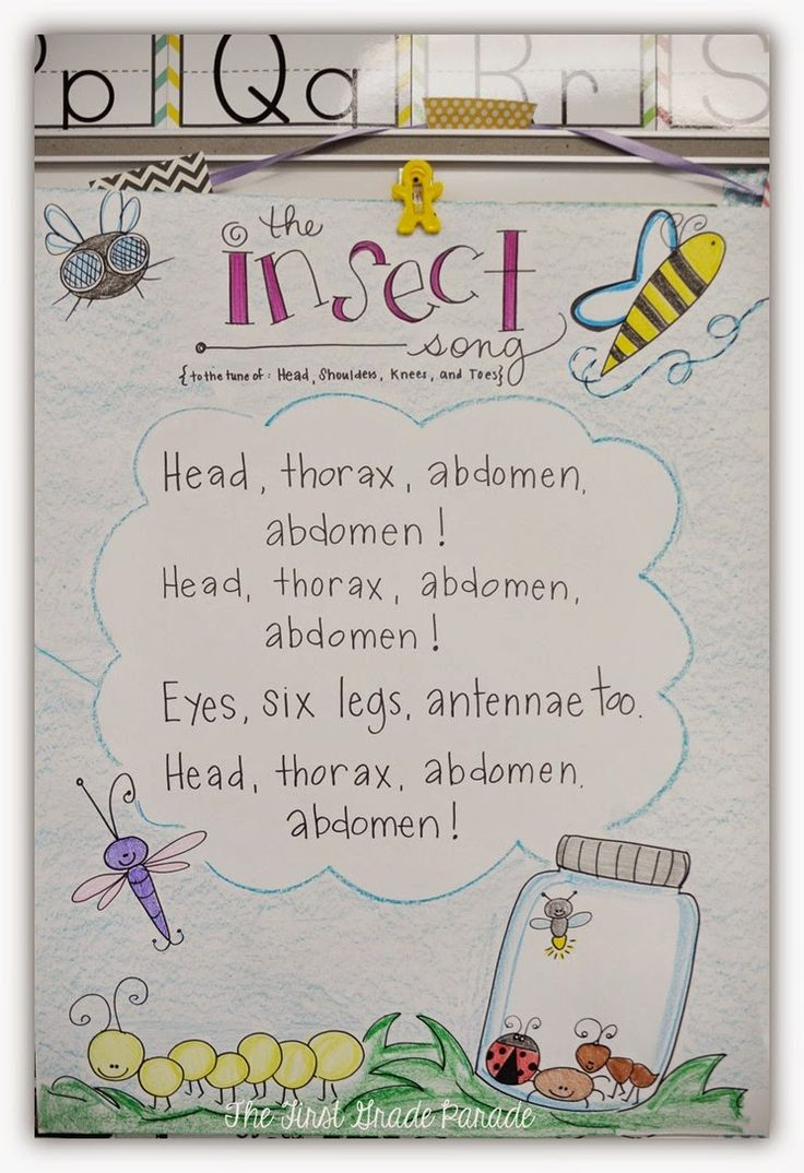 What's the Bug Deal? Love this Head Thorax Abdomen song and other anchor chart ideas from The First Grade Parade!