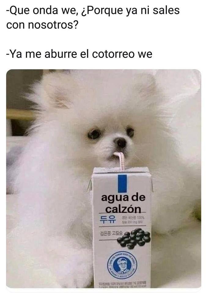 Bello Perro Blanco Tomando Agua De Calzon Funny Memes Best Funny Pictures Funny