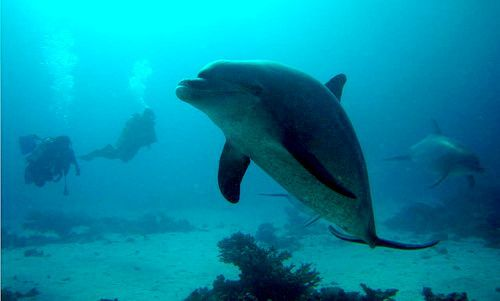 Diving at El Gouna, Egypt. Dolphin House