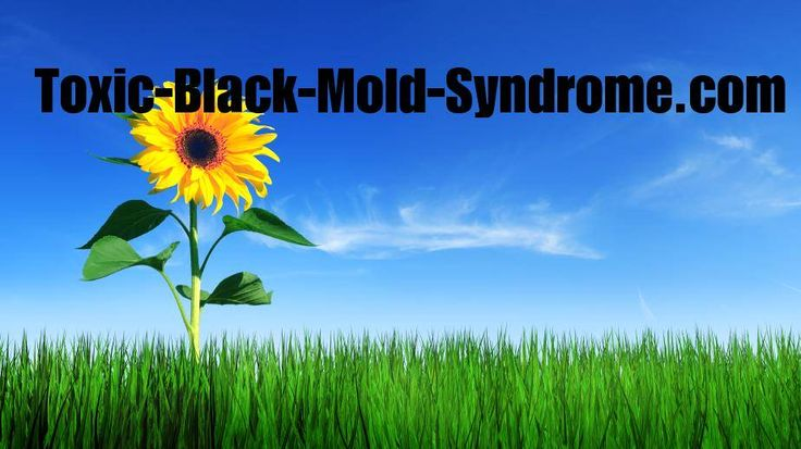 The symptoms of black mold poisoning are hard to recognize because they look like other diseases.