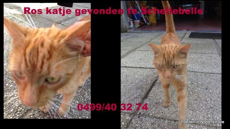 Ros katje gevonden te Schellebelle.