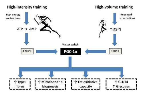 Science of Running: Crossfit endurance, Tabata sprints, and why people just don't get it. Science behind balancing long aerobic sessions and high intensity interval training and training logically versus randomly.