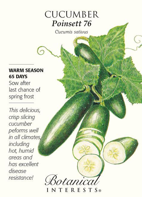 Poinsett 76 Cucumber Seeds - 2 grams