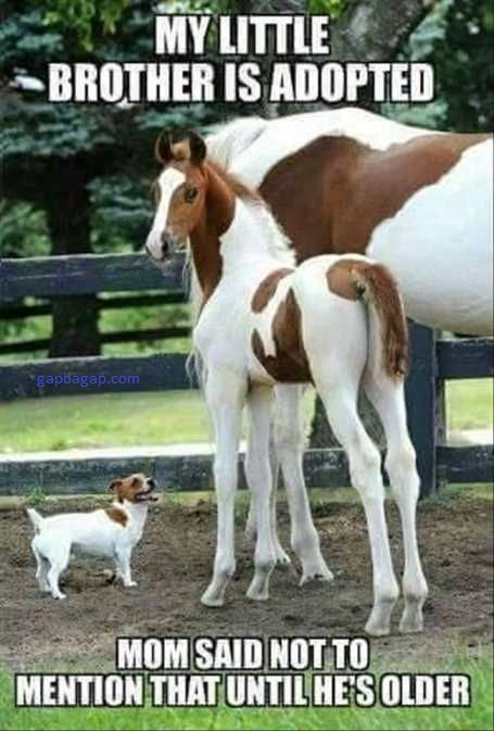 Funny Picture Of Dog And Horses