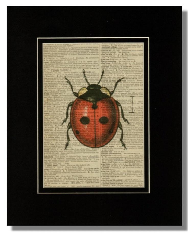 17 best images about ladybug ladybug on pinterest for Dictionary canape