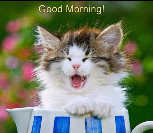 Good morning Beautiful!!! Hope you slept well!!! I am awake, still in bed thinking it would be a great place to stay all day. Hope you're having a wonderful morning!!!!!   Talk soon and LAB!!!!