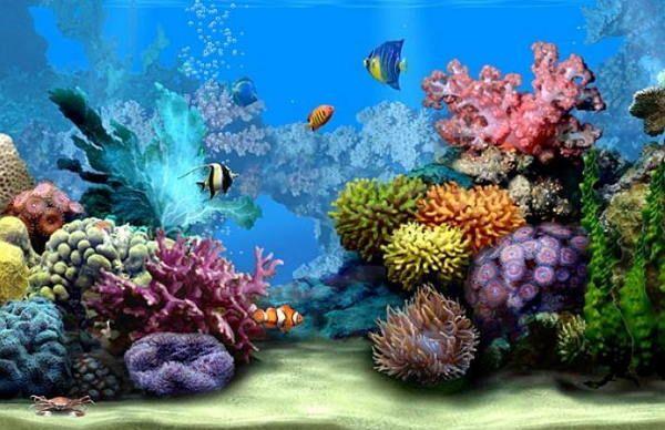 Top 10 Free Screensavers 2018 For Windows 10 Aquarium Live Wallpaper Moving Wallpapers Aquarium Backgrounds