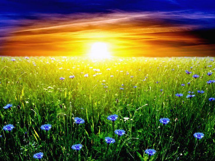 Sol Sobre Campo Florido