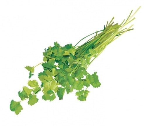 Загадки про овощи   МАМА И МАЛЫШ