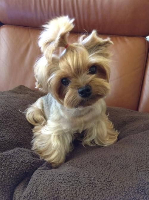 Now, I dont usually like little dogs much... but for you, Ill make an exception.
