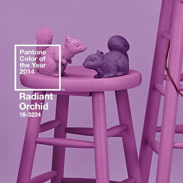 PANTONE Color of the Year 2014 - Radiant Orchid Squirrel Appreciation Day