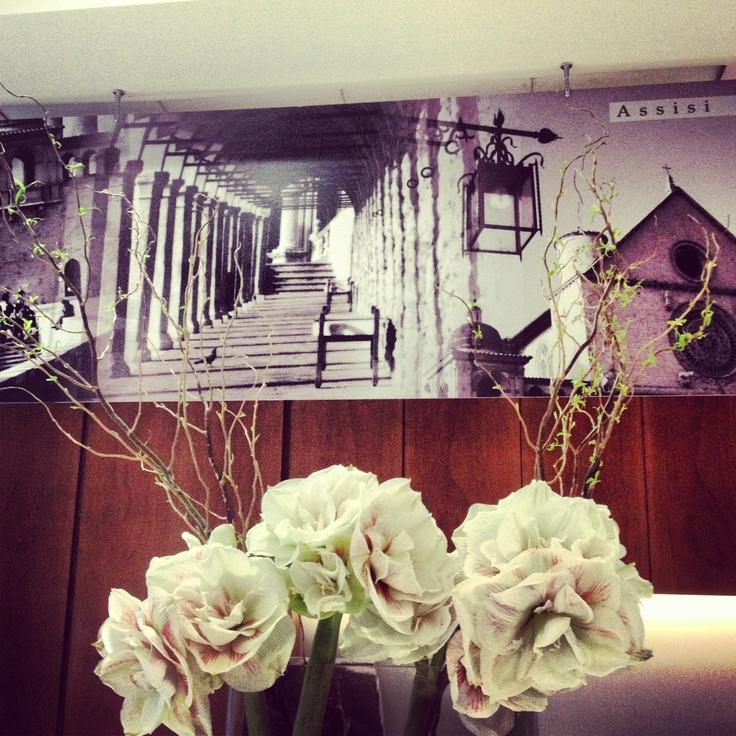 S. Francesco's Church and beautiful Flowers composition (Amaryllis) Photographer: Tomassini Gianfranco  Flowers Artist: Bloom di Luisa Gervasi